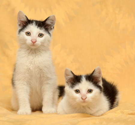 Two kitten photo