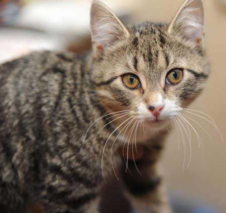 Tabby cat Stock Photo - 14907118