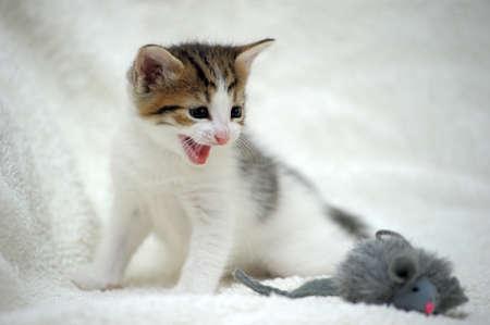 charming little kitten photo