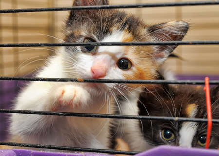 cage animals: kittens in a cage