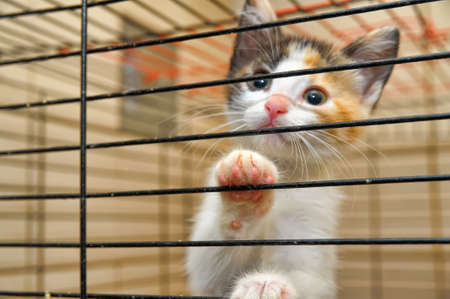 kittens in a cage Stock Photo - 14575885