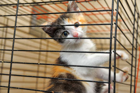 kittens in a cage  Stock Photo - 14575887
