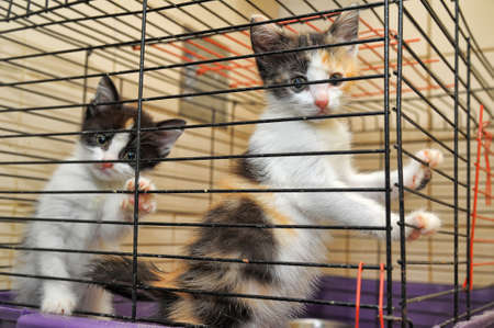kittens in a cage  photo