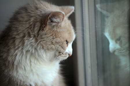 cat looking out the window photo