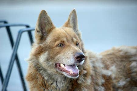 Homeless dog photo