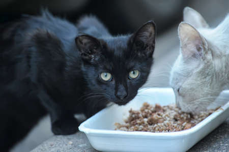Homeless cats eat in the street photo