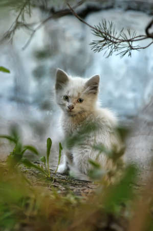 little stray kitten Stock Photo - 18378342