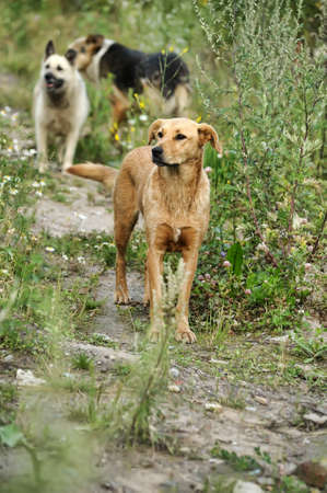 doggie: pack of stray dogs Stock Photo
