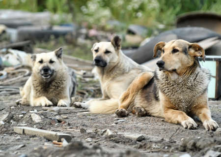 Pack of homeless dogs  photo