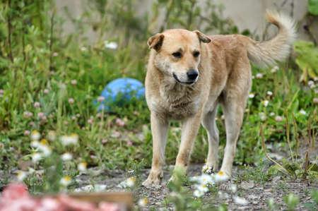 Close up portrait of a stray dog photo