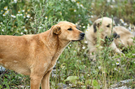 pack of stray dogs photo