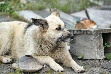 Stray dog photo