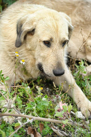 Stray dog Stock Photo - 14904294