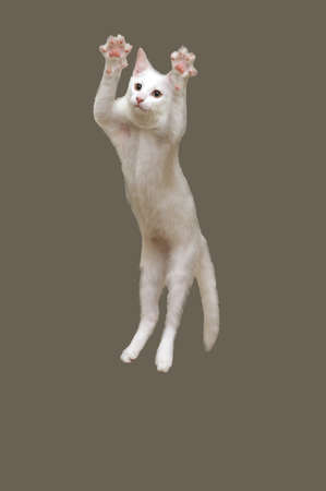 Cat jumps  photo