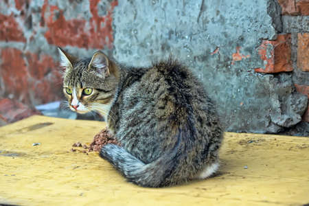 alley cat eats photo