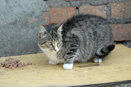 alley cat eats photo