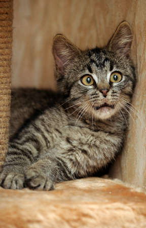 Cute Tabby Kitten photo