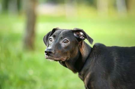 Black mixed breed portrait Stock Photo - 14757412