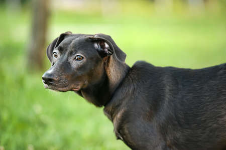 Black mixed breed portrait Stock Photo - 14757410