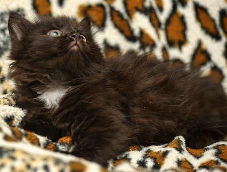 catchlight: Black and White Kitten