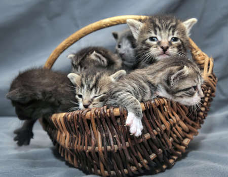 Kittens in a basket Stock Photo - 17996451