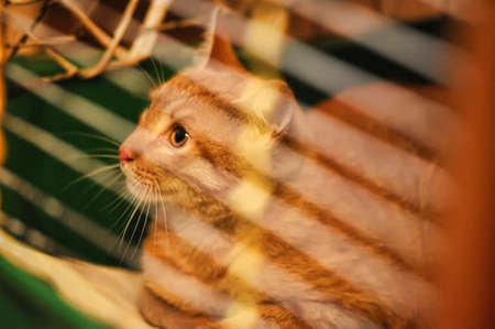 red cat in a cage photo