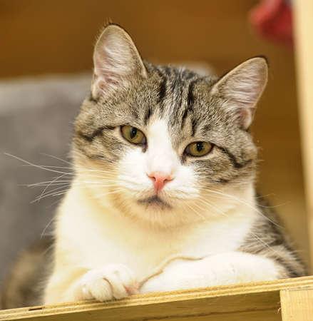 Hermoso gato gris y blanco