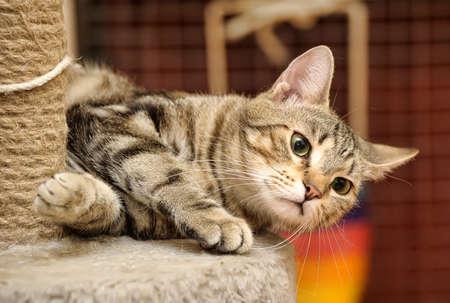 kat krabpalen in de buurt Stockfoto