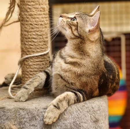 housecat: cat scratching posts near Stock Photo