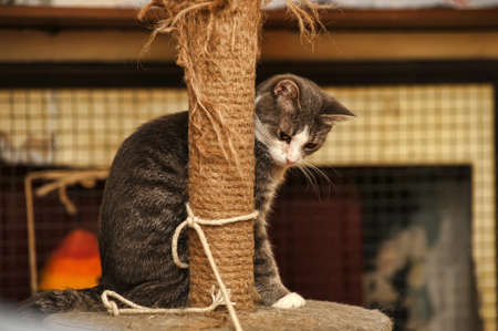 cat scratching posts near photo