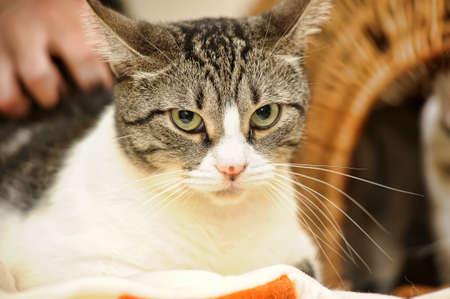 Cat s Face  photo