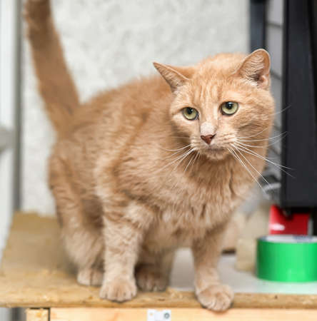 The red cat with green eyes looks Stock Photo - 14893231