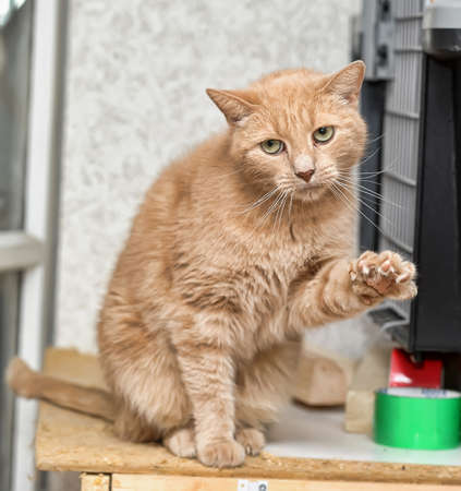 The red cat with green eyes looks Stock Photo - 14893233