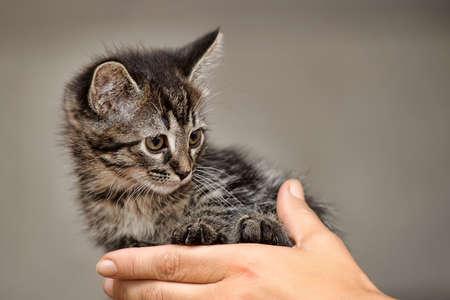 whiskar: Kitten in the hands