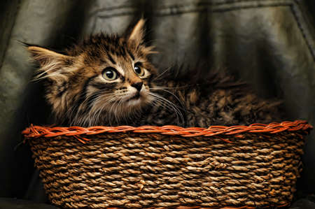 Kitten in a Basket photo
