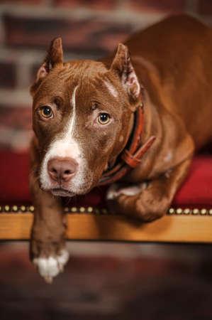 Studio doggy Stock Photo - 14856759