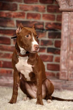 Studio doggy Stock Photo - 14856761