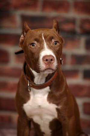 Studio doggy Stock Photo - 14856758