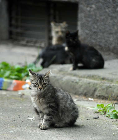 homeless kittens in the street photo