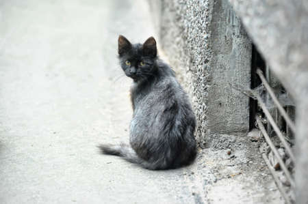 lugubrious: homeless kitten in the street Stock Photo