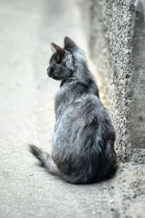 rueful: homeless kitten in the street Stock Photo