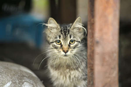 homeless kitten in the street Stock Photo - 18261181