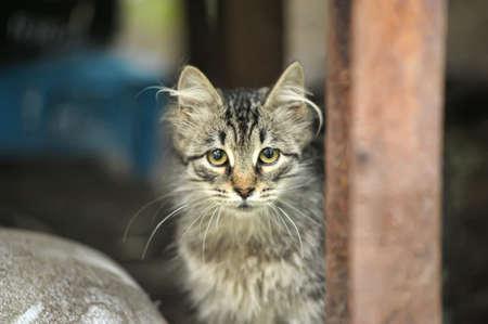 homeless kitten in the street Stock Photo