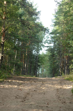 road in the forest photo