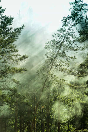 forest in fog photo