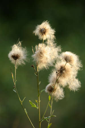 Fluff photo