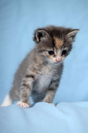 small funny kitten on blue background photo