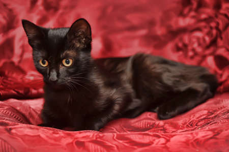 Black cat over red photo