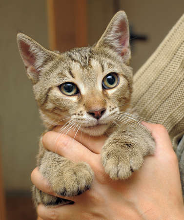 tabby cat in her arms photo