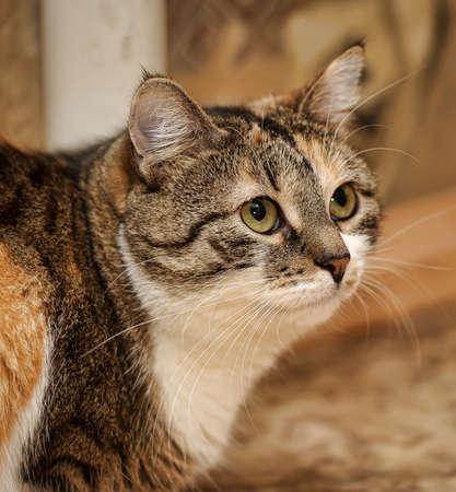 European cat  photo